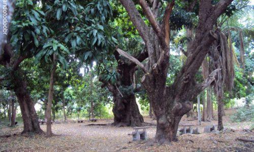 Carnaubeira da Penha - Mangueira do Brejo (Sítio Brejo do Gama)