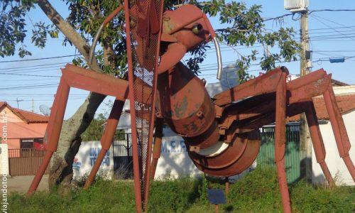 Queimadas - Formiga na entrada da cidade