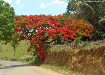Vila Valério - Árvore a caminho de São Gabriel da Palha
